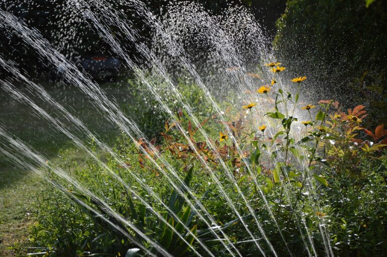 When is the Best Time to Water Grass?