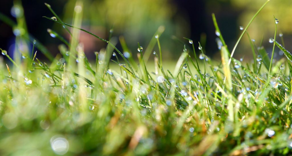 wet grass blades - learn more about grass clippings