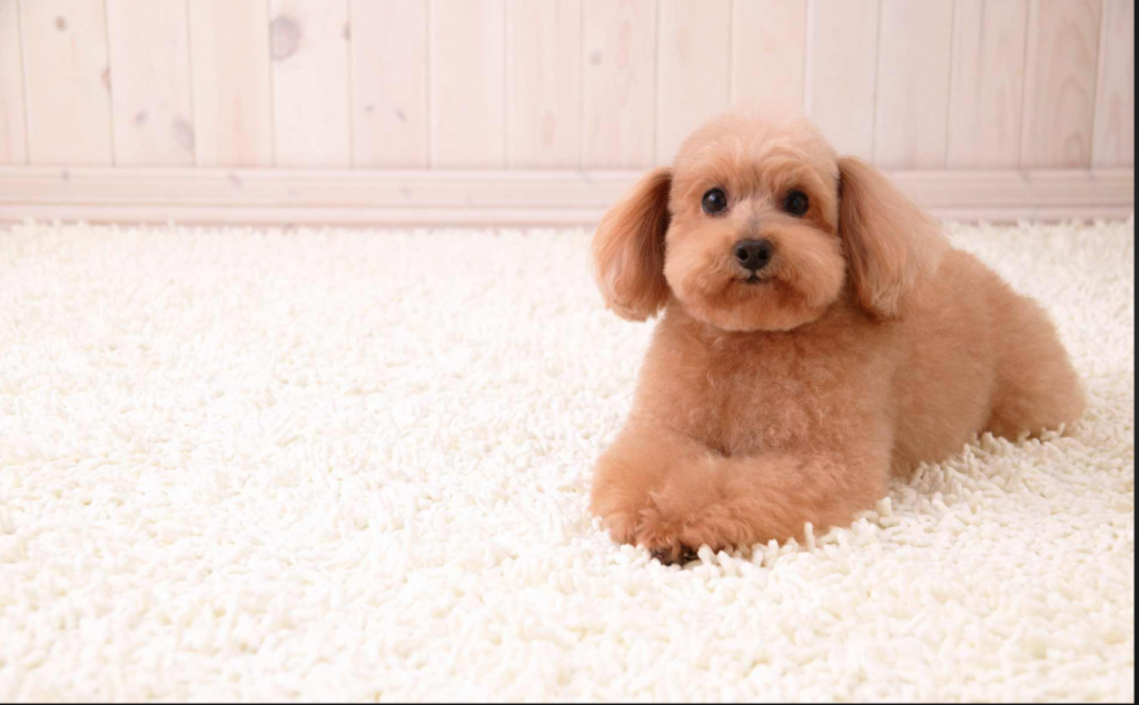 how to clean dog pee